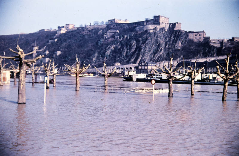 baum, Festung Ehrenbreitstein, Hochwasser, Koblenz, Rhein, schiff