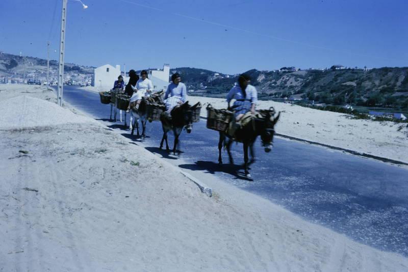 Esel, korb, reiten, transport