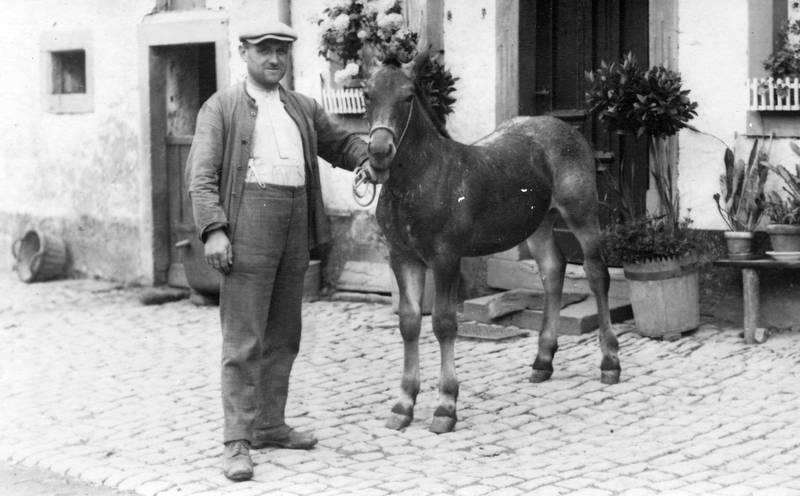 hosenträger, Pferd, Schiebermütze