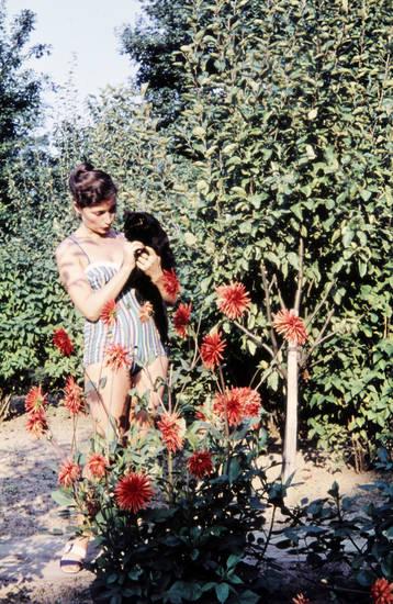 Blume, haustier, kater, Katze, pflanze, weg, Wegabzweigung