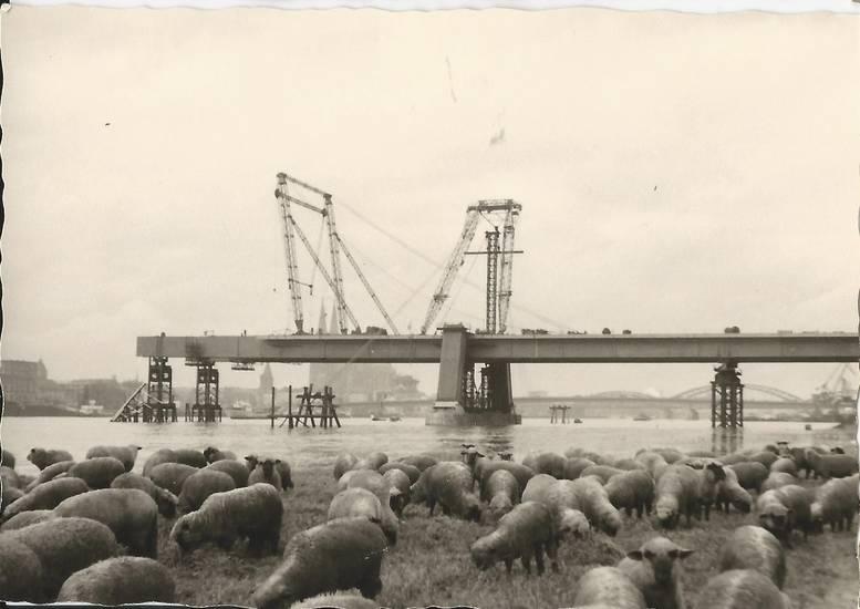 Baustelle, gerüst, köln, pylon, Rhein, schaf, Severinsbrücke, Stütze, Wasserkran