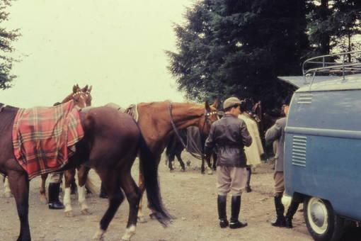 Bulli oder Pferde?