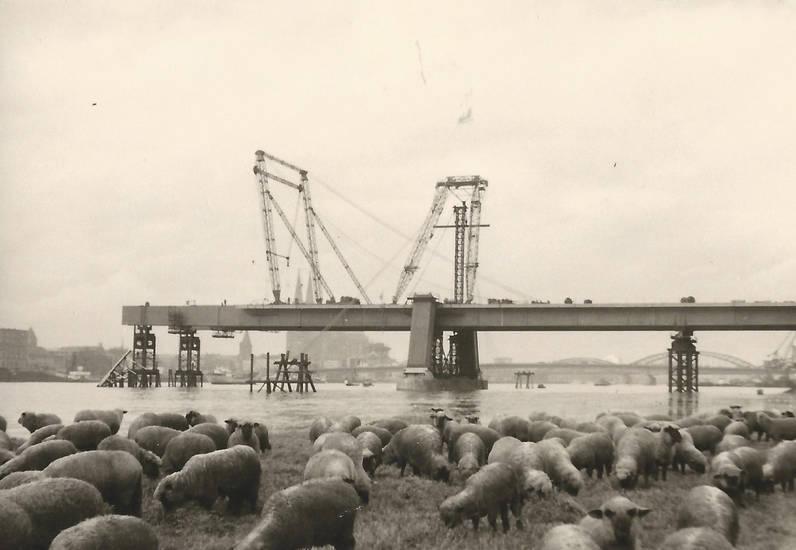 Baukran, Baustelle, gerüst, köln, pylon, Rhein, schaf, Severinsbrücke, Stütze