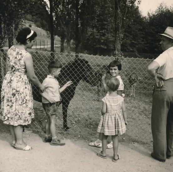 ausflug, familie, Kindheit, Pferd, pony, Reh, spaziergang, Weide, wiese, zaun