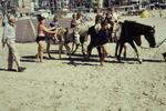 Ponys am Strand