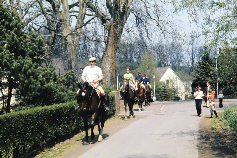 ausflug, haus, hecke, Laterne, Pferd, reitausflug, reiten, straße