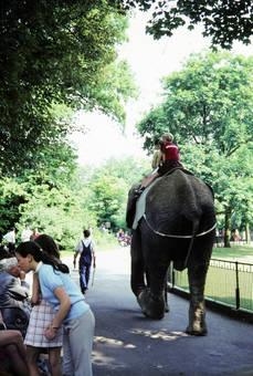 Reiten auf einem Elefanten