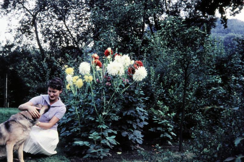 baum, Blume, gras, hund, pflanze, streicheln