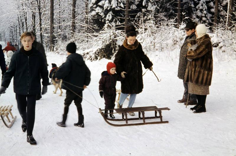 baum, hund, Kindheit, mantel, pelz, schlitten, schnee, winter