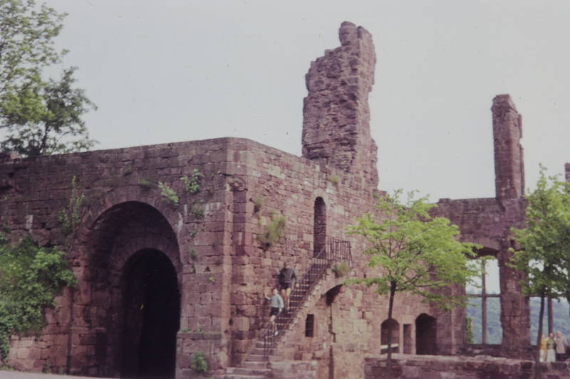 baum, burg, Nideggen, Ruine, Treppe