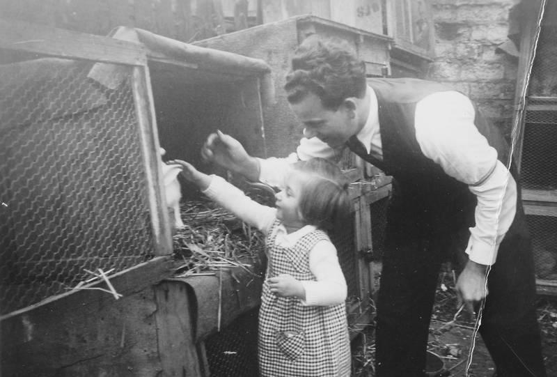 haustier, Kaninchen, Kindheit, Stall, streicheln
