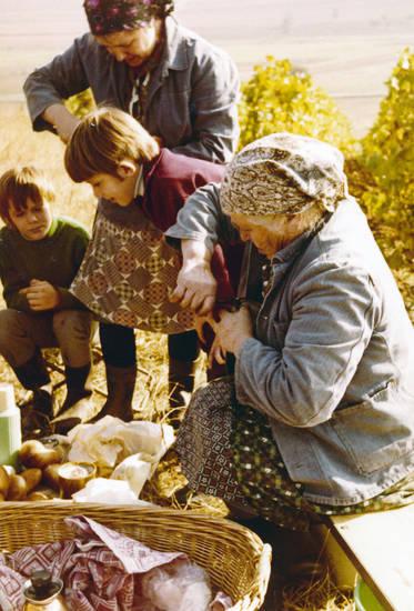 brötchen, essen, familie, Kindheit, korb, mahlzeit, pause, rosenberg, weinanbau, weinbau, Weinberg, Weinlese