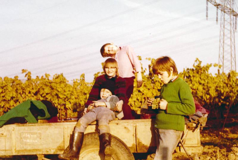anhänger, Ernte, Familienbetrieb, Gummistiefel, herbsten, Kindheit, strommast, Trauben, traubenlese, Weinlese