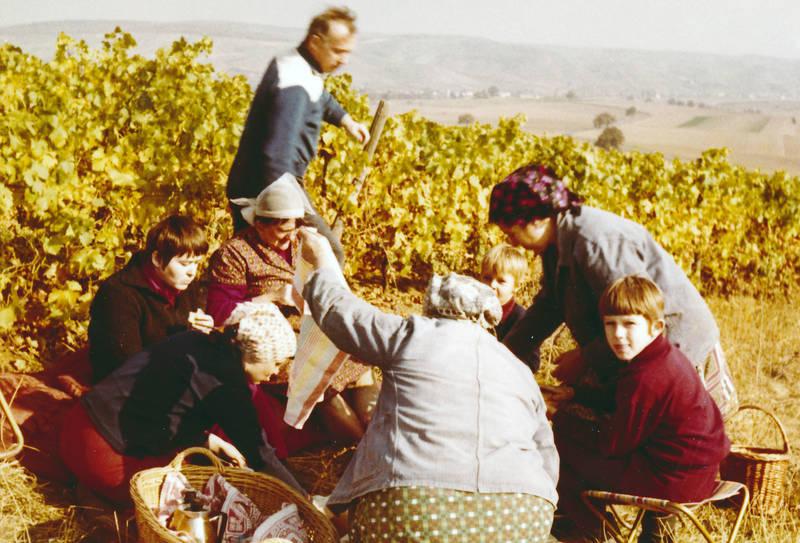 Ernte, essen, familie, herbsten, mittagspause, picknick, rosenberg, weinanbau, Weinberg, Weinernte, Weinlese