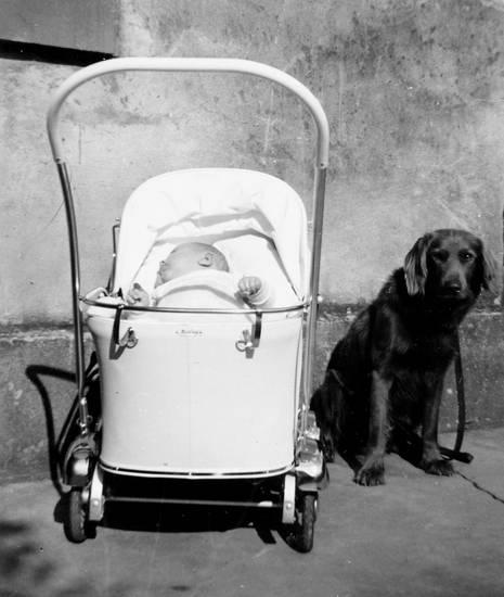 baby, haustier, hund, kind, kinderwagen