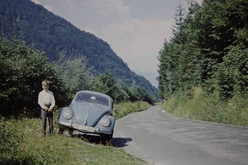 Käfer aus Mainz