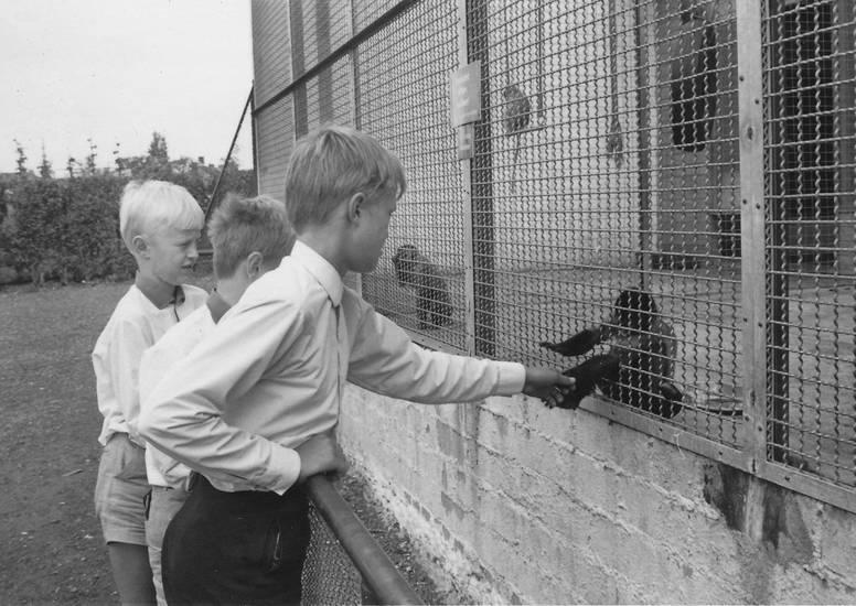 Affen, füttern, gehege, hochwildschutzpark, Kindheit, Rheinland, Wildpark