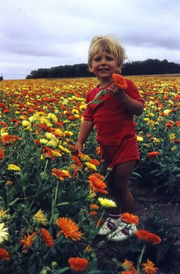 Beet, Blume, feld, Kindheit, Pflücken