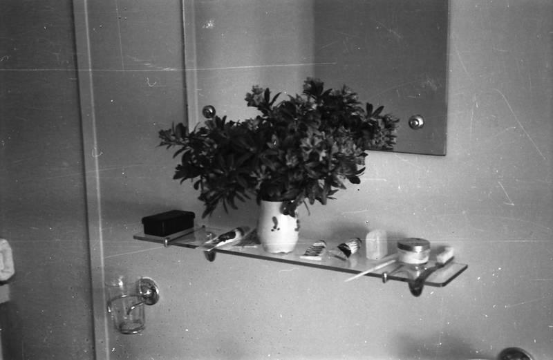 ablage, Blumenvase, Bürste, dusche, pflanze, spiegel, Vase, zahnpasta