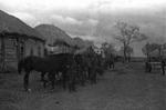 Pferde in Reih und Glied
