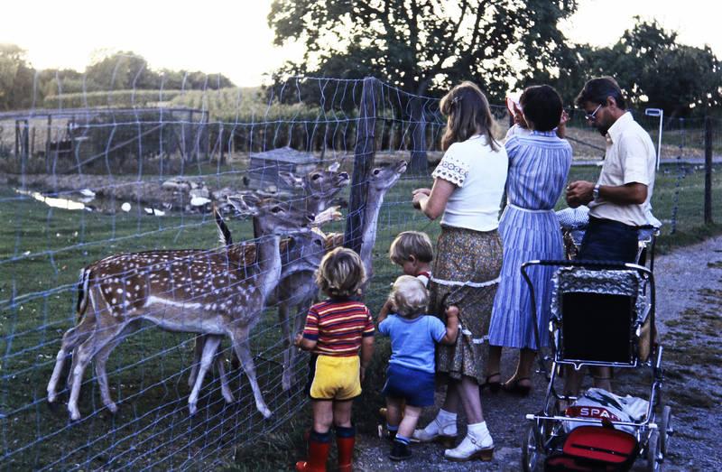 ausflug, familie, gehege, Gummistiefel, kinderwagen, Reh, Rehe, spar, Wildpark, zaun