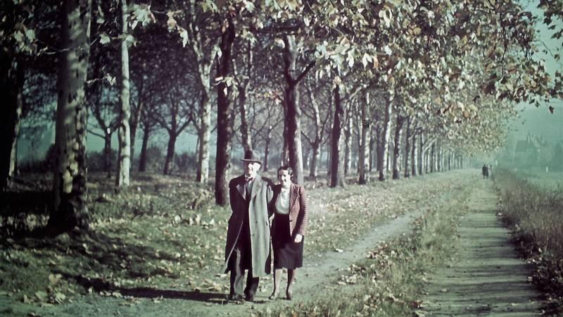 allee, Düsseldorf, farbfotografie, Herbst, spaziergang