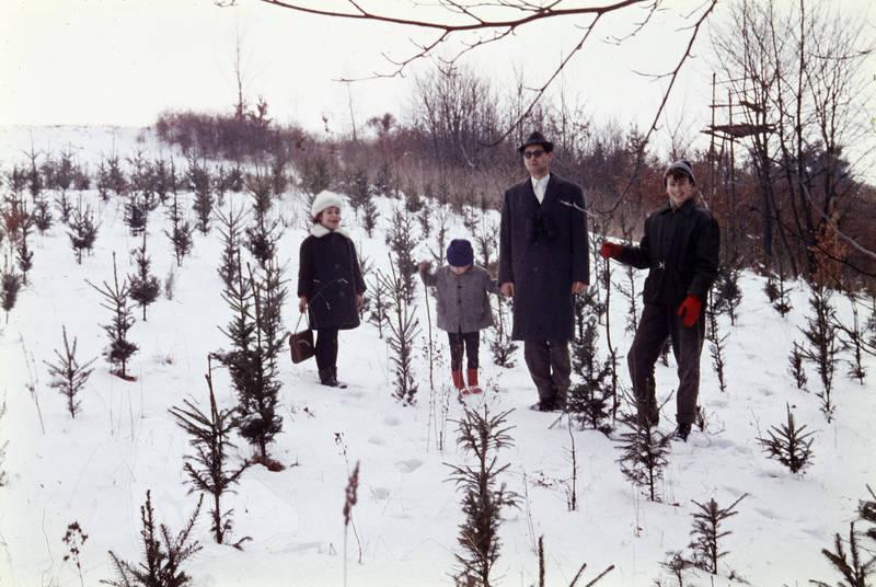 baum, familie, Kindheit, schnee, spaziergang, wiese, winter