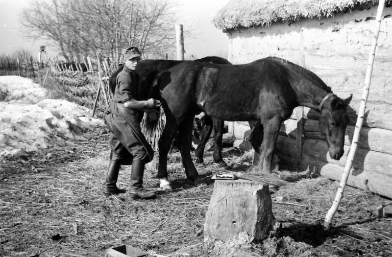 Heu, Pferd, Pflege, schnee, soldat, Uniform