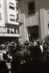 Paradenpferd