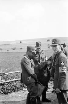 RAD-Männer füttern Pferd