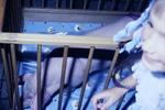 Schwein im Kinderbett