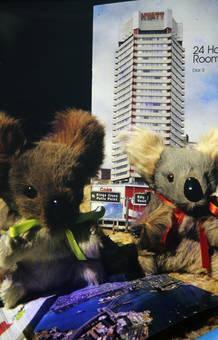Teddy-Koala-Bär