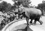 Elefant und Publikum