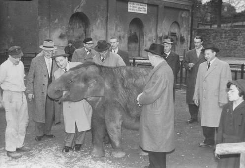 Elefant zum Anfassen