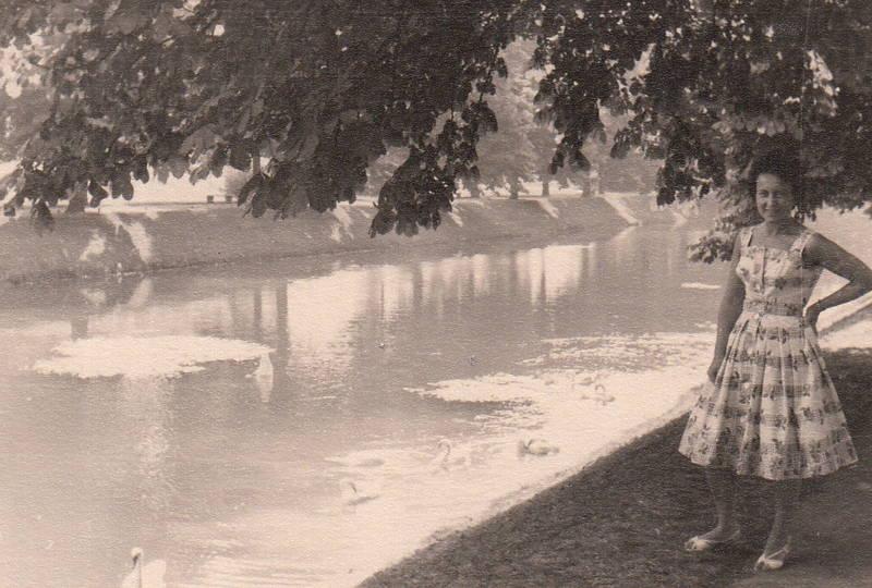 Kanal, kleid, park, Rhein, schwan