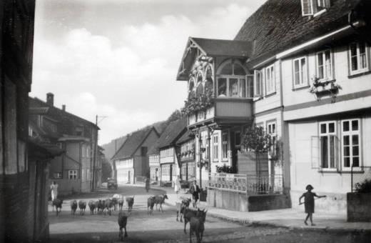 Hauptstraße mit Herde