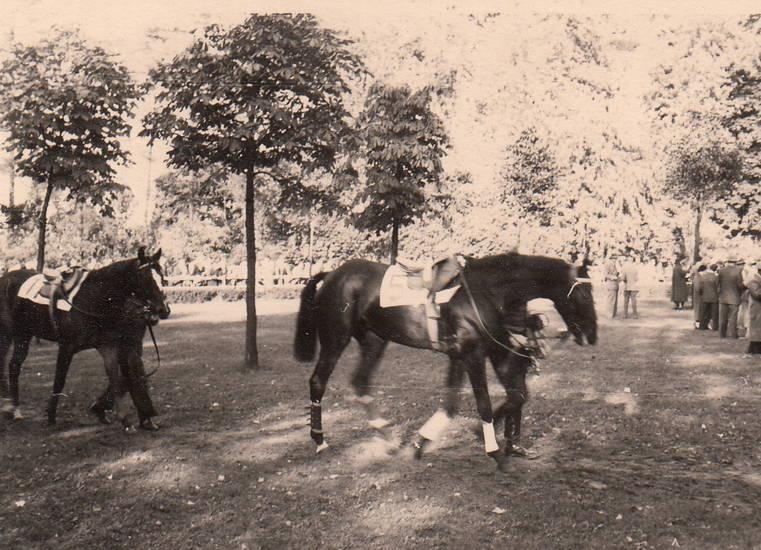 köln, Pferd, pferderennbahn, pferderennen, rennen