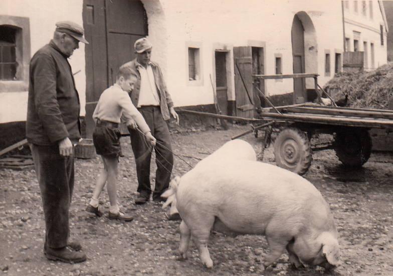 Bauernhof, Hof, Landwirt, Landwirtschaft, lederhose, Schwein