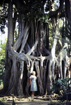 Vor den Bäumen