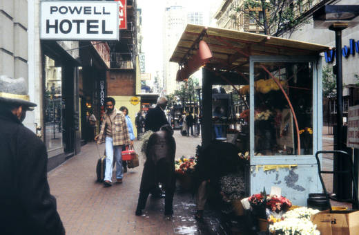 Blumen zu kaufen