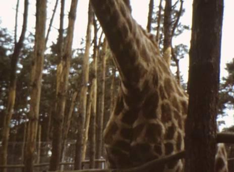 Safariland Tüddern
