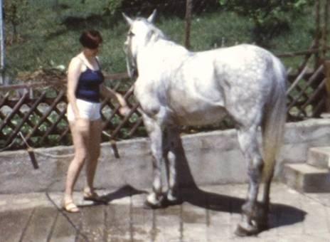 Pferdewäsche