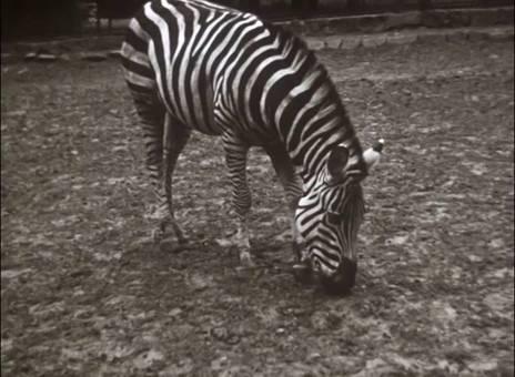 Wuppertal und Zoo