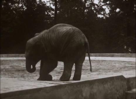 Gelsenkirchener Zoo