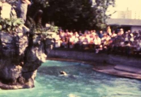 Zoo / Schwimmbad