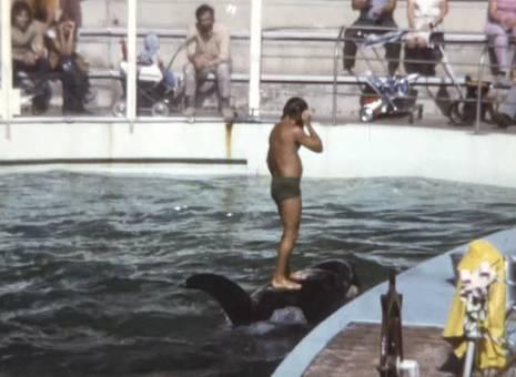 Delfin- und Schwertwal-Show