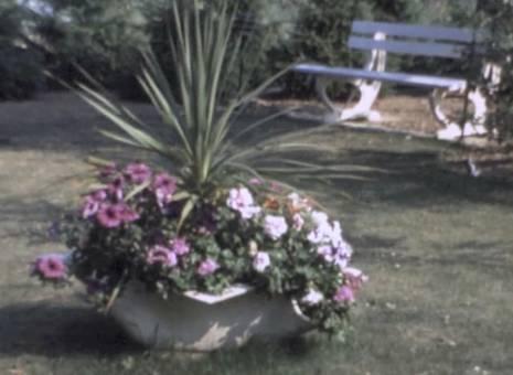 Blumen im Dorf