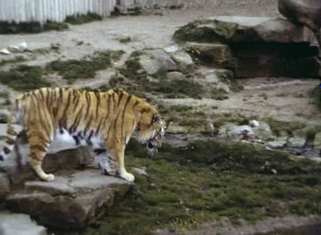 Tiere im Zoo von Münster