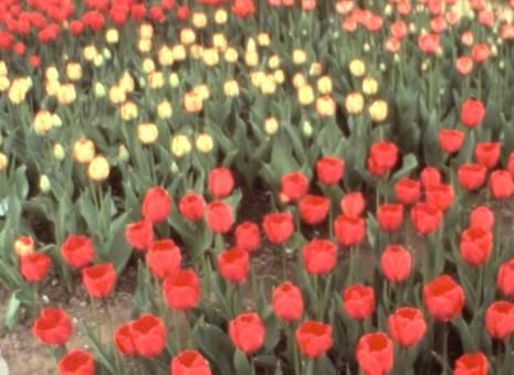 Ein sommerlanges Blumenfest