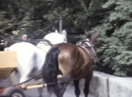 Fahrten durchs Siebengebirge